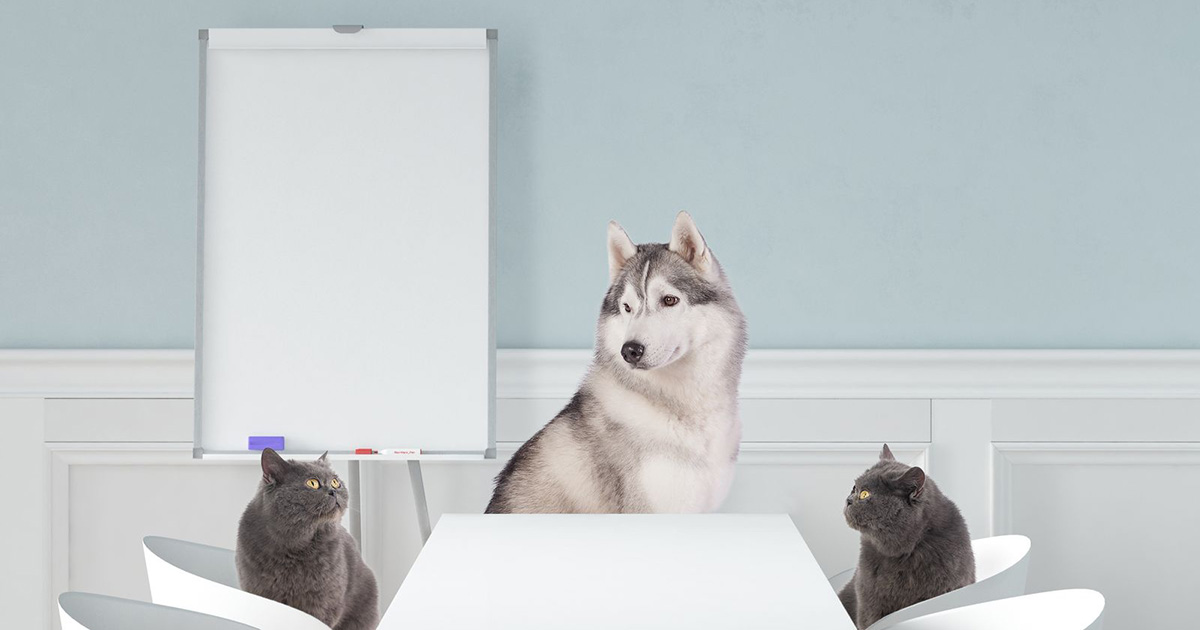Catgratulations: special collection of frisky graphics for International Cat Day: Two cats and a dog on a business meeting