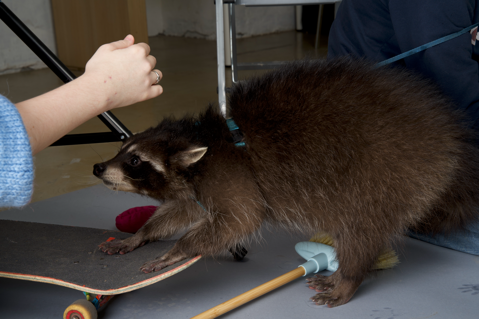 Working secrets of a stock photographer: posing hacks, cemetery adventures, and a rowdy raccoon: backstage shot with raccoon