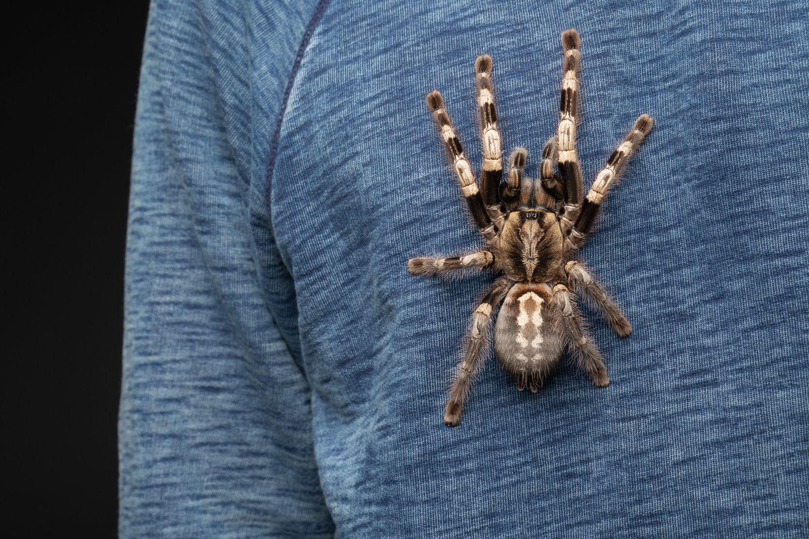 A very photogenic tarantula