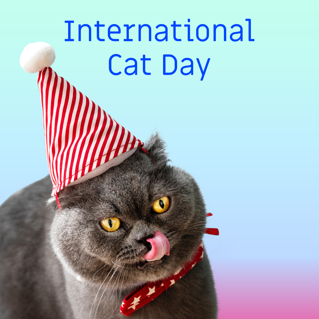 Catgratulations: special collection of frisky graphics for International Cat Day: cat day media template